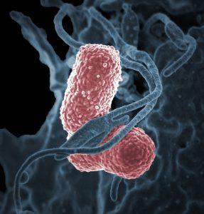 Klebsiella pneumoniae pałeczka zapalenia płuc